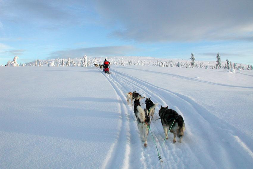 rucksack-reisen-aktivcamp-idre-winter-hundeschlittentour